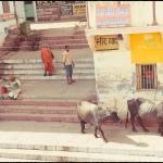 2012-02-29_Indien-2012_2855