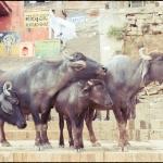 2012-02-29_Indien-2012_2885