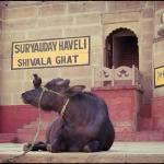 2012-02-29_Indien-2012_2901