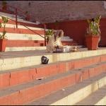 2012-03-02_Indien-2012_2943