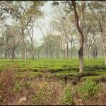 2012-03-12_Indien-2012_3439