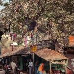 2012-03-13_Indien-2012_3473
