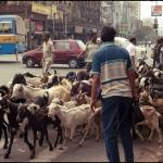 2012-03-13_Indien-2012_3490